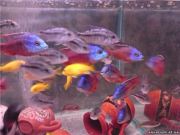 ribki-akvariumnie-i-porno