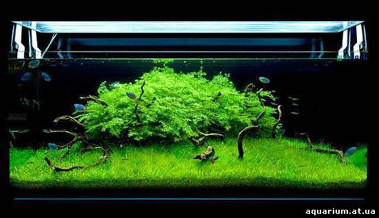 Aquarium Contest : Top 10 Acuavida Aquascaping Contest 2009(???????????? 2009 ...